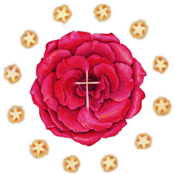Rosecross-Transparent-Badge 1